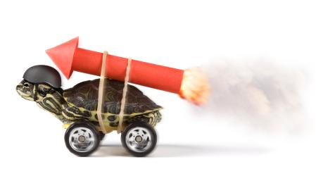 Turtle-Rocket1